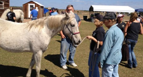horse-sanctuary-rescue-16-hands-florida-meet-ponies