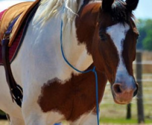 horse-sanctuary-rescue-16-hands-florida-prima
