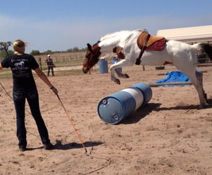 horse-sanctuary-rescue-16-hands-florida-prima-demo