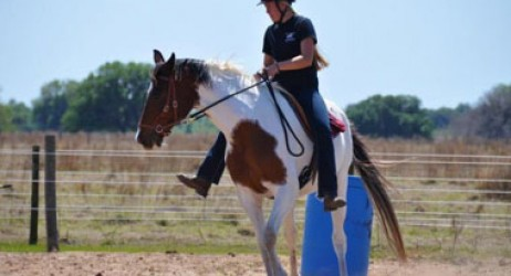 horse-sanctuary-rescue-16-hands-florida-prima-jade-2