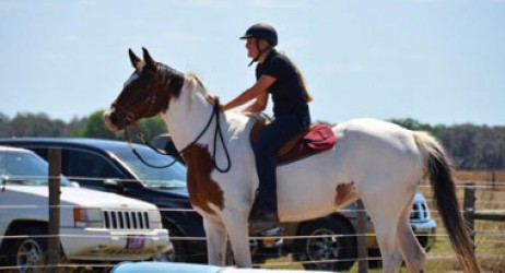 horse-sanctuary-rescue-16-hands-florida-prima-jade