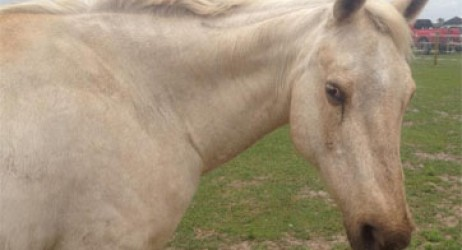 horse-sanctuary-rescue-16-hands-florida-3-2014-a