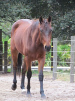 horse-sanctuary-rescue-16-hands-florida-scutter-1s-200