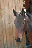 horse-sanctuary-rescue-16-hands-florida-scutter-2-200