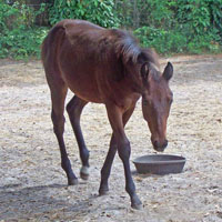 horse-sanctuary-rescue-16-hands-florida-scutter-3-200